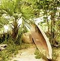 Jungle Canoe by Ronald Irwin