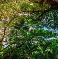 Jungle Canopy Kauai Hawaii by Blake Webster