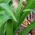 Jungle Cat by Bob Nolin