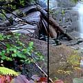 Jungle Falls by Brad Scott