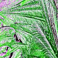 Jungle Flora by Will Borden