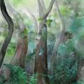 Jungle by Ivana Westin