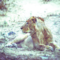 Jungle King by Neha Gupta
