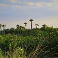 Jungle Oasis by WanderBird Photographi