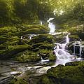 Jungle Riverflow Scene by Luis Lyons