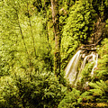 Jungle Steams by Jorgo Photography - Wall Art Gallery