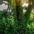 Jungle Vines Kauai Hawaii by Blake Webster