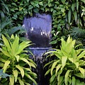 Jungle Waterfall by Darren Wagner