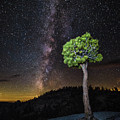 Juniper And Stars by Anthony Michael Bonafede