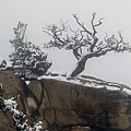 Juniper In Snow-signed-#2572 by J L Woody Wooden