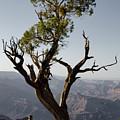Juniper Tree At Grand Canyon II by David Gordon