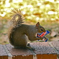 Junk Food Squirrel by Denise Mazzocco