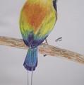 Juruva Bird by Juliana Motzko