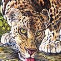 Just A Big Pussycat by Donald Dean