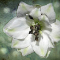 Just A Flower by Teresa Zieba