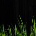 Just A Little Grass by Donna Blackhall