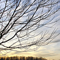 Just A Tree And Clouds by Deborah Benoit