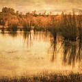 Just After Dawn by Don Schwartz