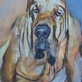 Just Another Magic Bloodhound by Debbie Anderson