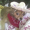 Just Because She Is A Chihuahua by Carol Wisniewski
