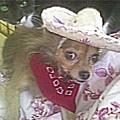 Just Because She Is A Chihuahua by Carol Wisniewski