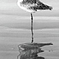 Just Being Coy - Bw by Christopher Holmes