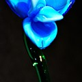 Just Blue by Jennifer Wick