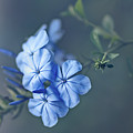 Just Feeling Blue by Hanna Tor