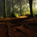 Just Listen by Jorge Maia