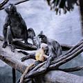 Just Monkeying Around by Karol Livote