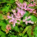 Just Pink by Judy Coggin