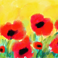 Just Poppies by Cristina Stefan