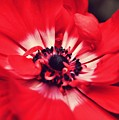 Just Red by JAMART Photography