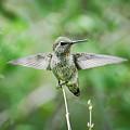 Just Spread Your Wings  by Saija  Lehtonen