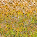 Just Wheat by Timothy Flanigan and Debbie Flanigan Nature Exposure