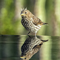 Juvenile House Sparrow 0689 by Tam Ryan