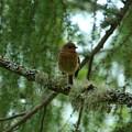 Juvenile Robin by Phil Banks