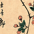 Kaido Ni Shokin IIi - Small Bird On A Branch Of Kaidozakura IIi by Utagawa Hiroshige