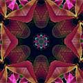 Kaleidoscope Christmas Poinsettia  by Karen Jensen