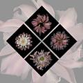Kaleidoscope Diamond by Heather Kirk