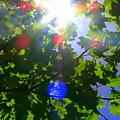 Kaleidoscope by Kirk Long
