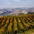 Kalthoff Common Vineyard by Karen  W Meyer