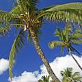 Kamaole Beach by Ron Dahlquist - Printscapes