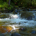 Kanaka Creek by Sharon Talson