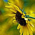 Kansas Sunflower by Mike Scheufler