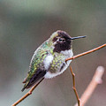 Karisa's Hummingbird.2 by E Faithe Lester