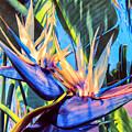 Kauai Bird Of Paradise by Dominic Piperata