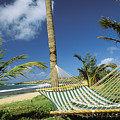 Kauai Hammock by Mary Van de Ven - Printscapes