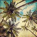 Kauai Island Palms - Blue Hawaii Photography by Melanie Alexandra Price