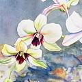 Kauai Orchid Festival by Marionette Taboniar